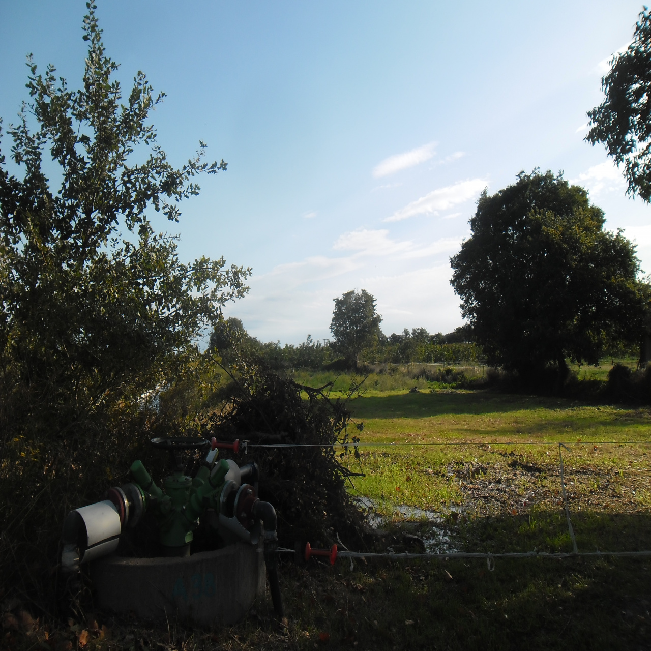 Image_5, Terrain, Ille-sur-Têt, ref :3462