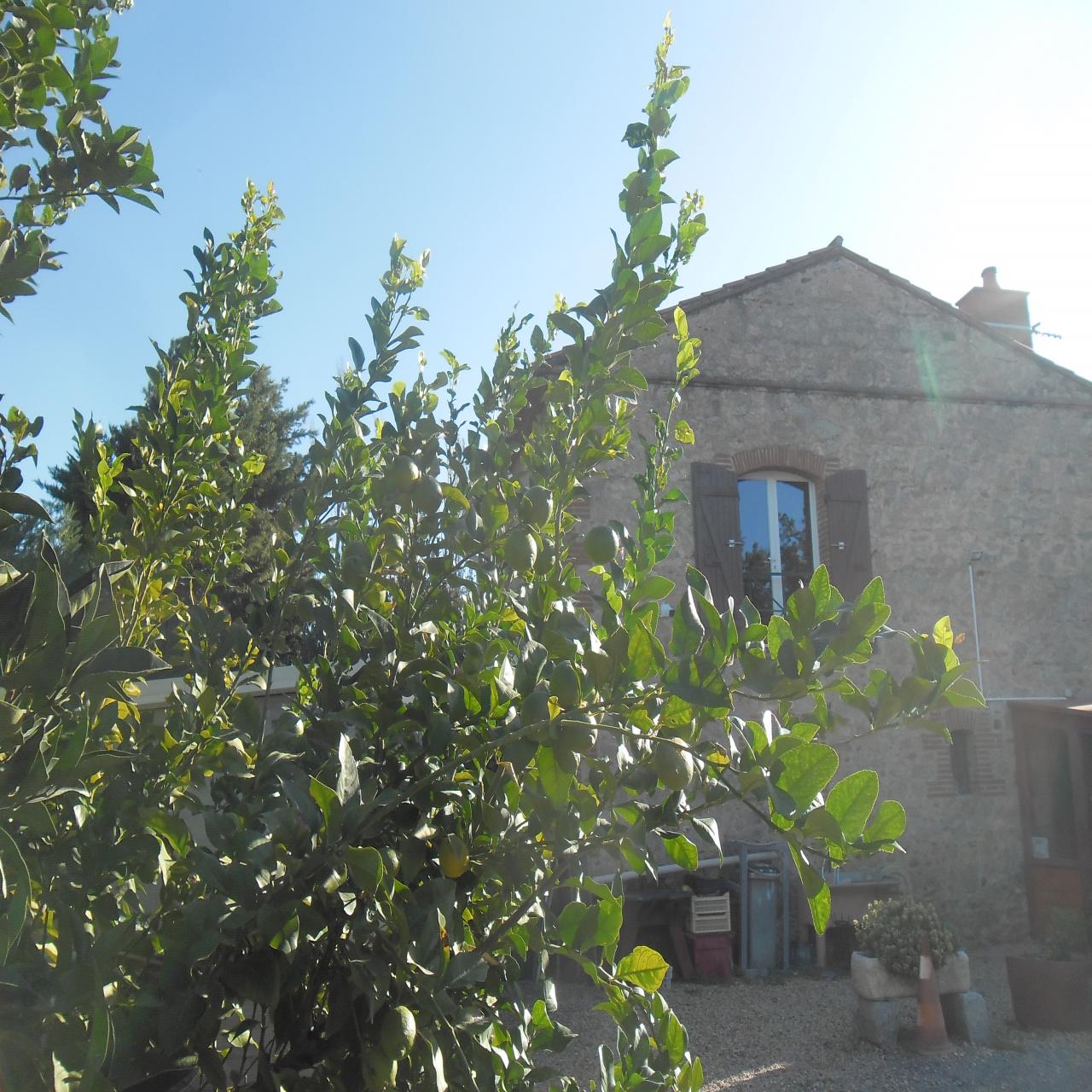 Image_1, Mas, Ille-sur-Têt, ref :3377