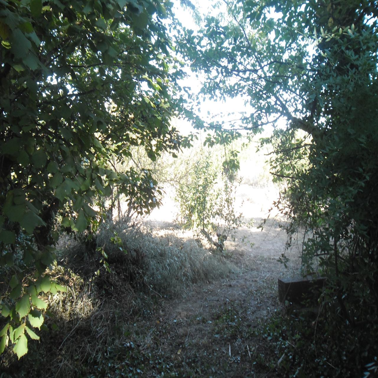 Image_1, Terrain, Ille-sur-Têt, ref :3310