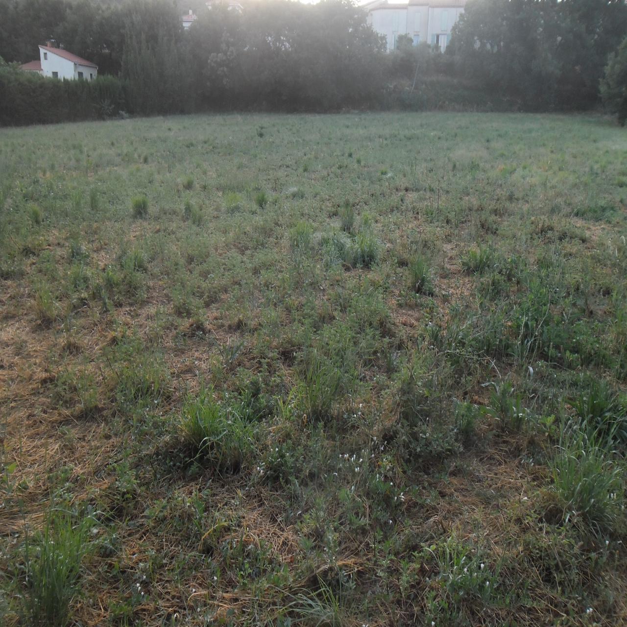 Image_3, Terrain, Ille-sur-Têt, ref :3299